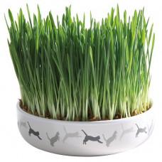 Kattgräs i keramikskål - 50g